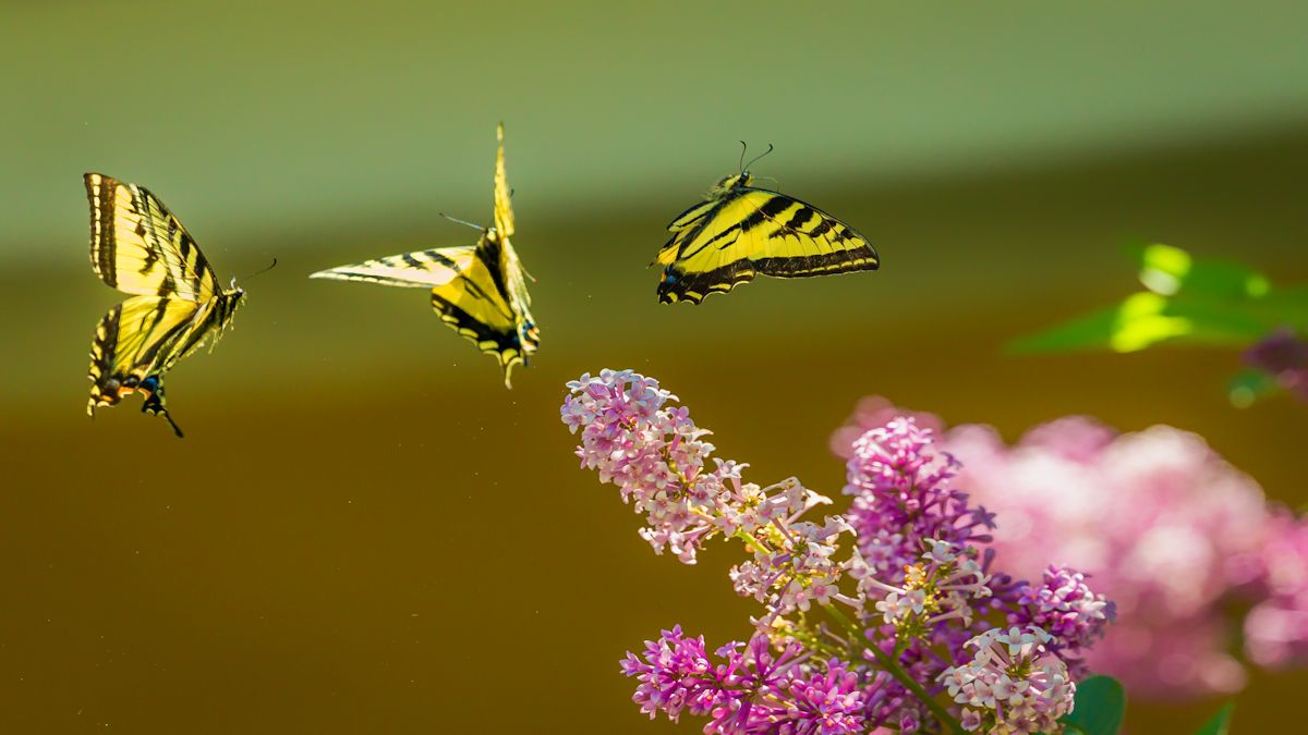 andrea reiman butterflies